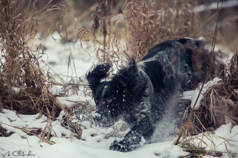 охота, собаки, снег На охоте.photo preview