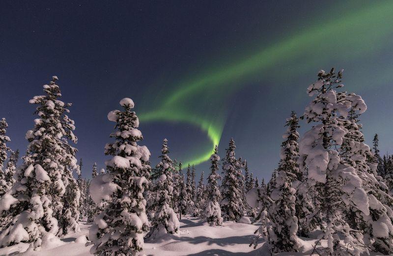 Aurora borealis, северное сияние Зимний лесphoto preview