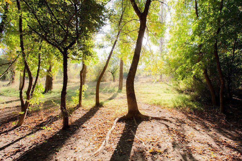 крым, лес, солнце, тени, лето Утроphoto preview