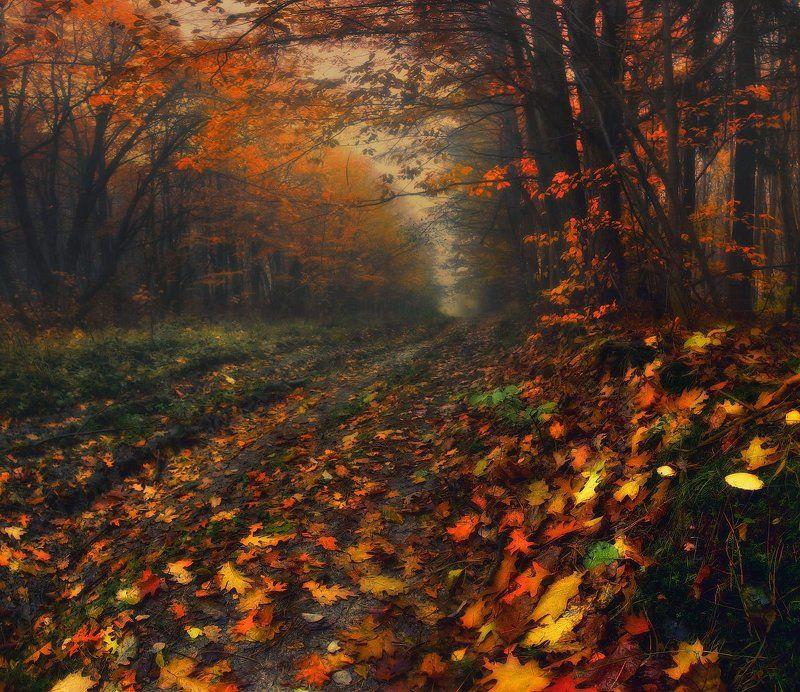 осень, утро, лес, дорога, туман, листопад Рыжая осеньphoto preview