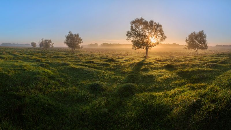 Лучи солнца на мокрой травеphoto preview