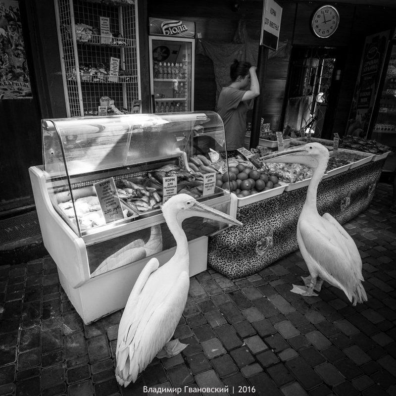 Пеликанам не продаём!photo preview