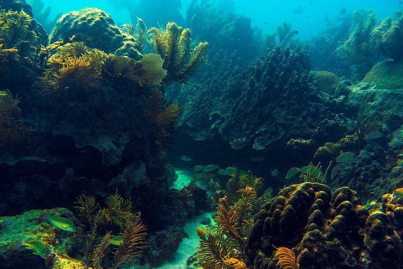 сказочный подводный лесphoto preview