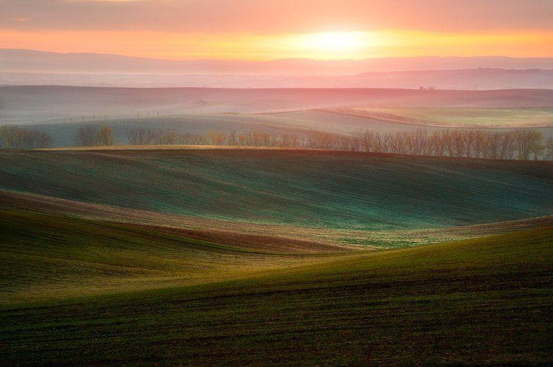 Моравия, восход, волны, поля, солнце, Волны под солнцемphoto preview