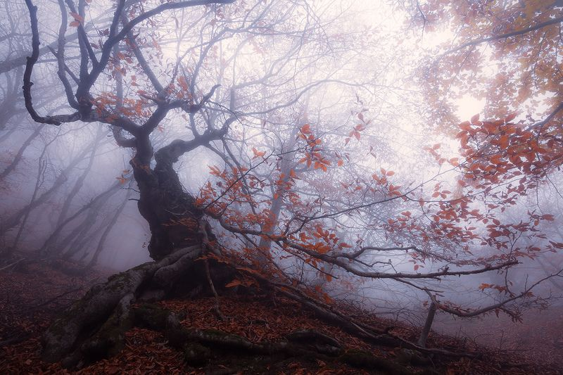 бук, туман о буках и туманеphoto preview