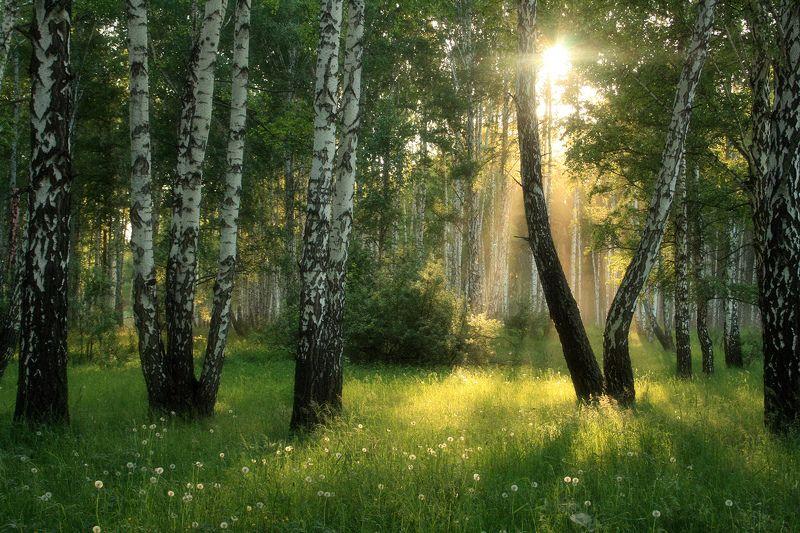 Доброе утро, Солнце!photo preview
