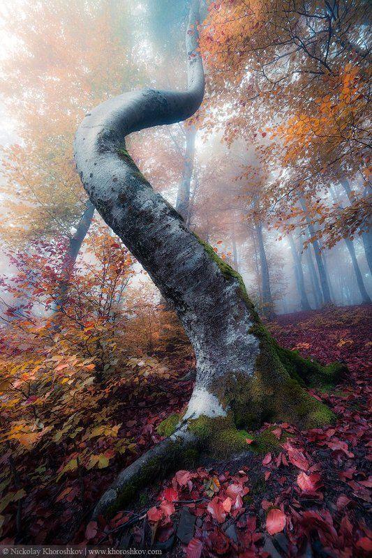 карпаты, украина, пейзаж, carpathian mountains, ukraine, Изгибы осеннего лесаphoto preview