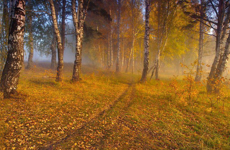 осень, утро, рассвет, туман, деревья, листья, желтые, лес Прогулка осенним утромphoto preview