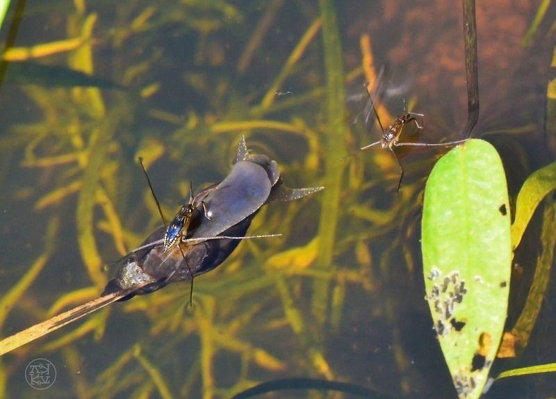 макро, насекомые, мир, вода, воздух встреча на границе photo preview