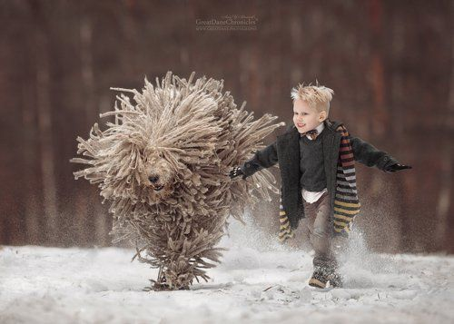 Komondor - it is really cool!