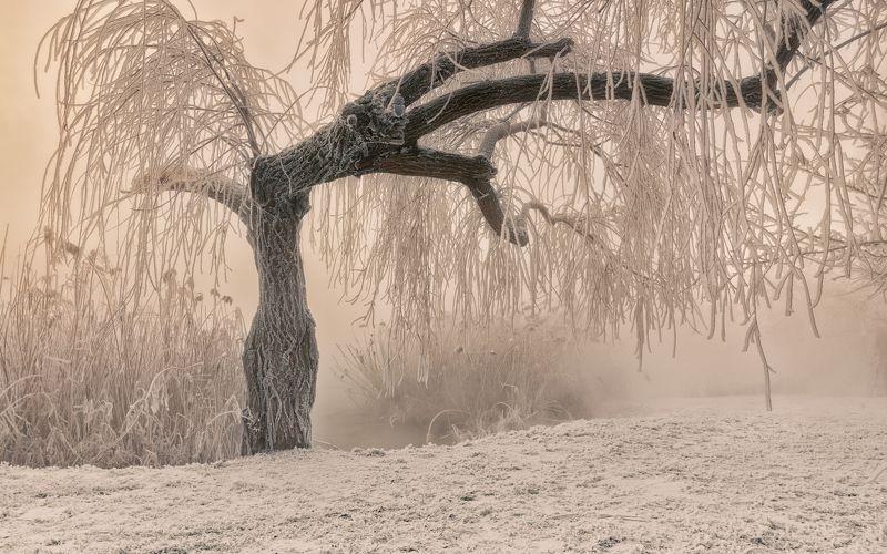 мороз, утро , туман , дерево , иней , камыш , инопланетянин Тёплая графика морозного утраphoto preview