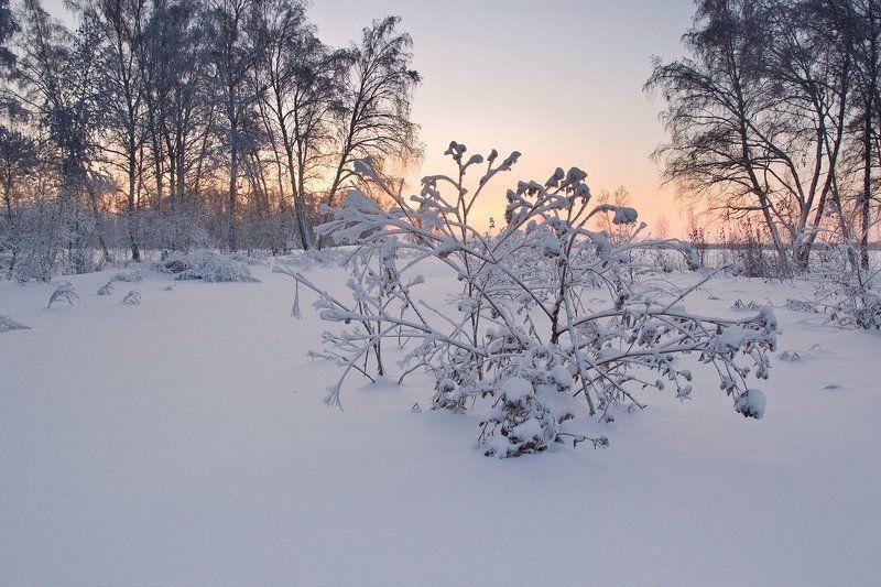 Морозным утром...photo preview