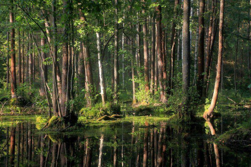лес свет вода В вечернем светеphoto preview
