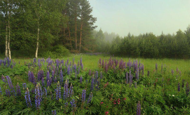утро туман ****photo preview
