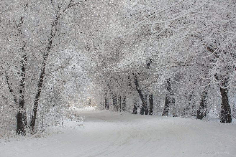 лес, поле, мороз, иней, снег, сибирь, нерозя, красноярск, береза, пейзаж, зима, енисей Снежное снежное одеяло зимыphoto preview