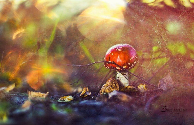 mushrooms,nature,forest mushroom historyphoto preview