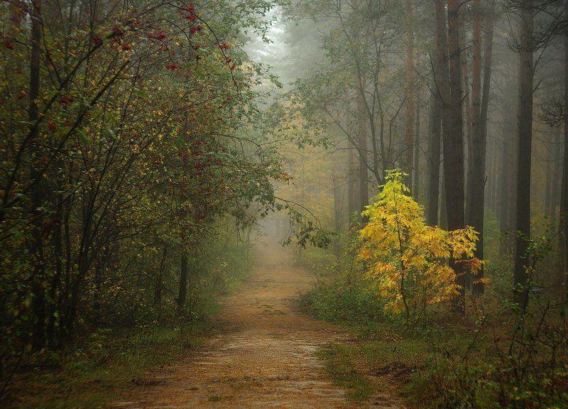 осень, утро, лес, туман, autumn, morninig, fog, forest По осенним тропкамphoto preview