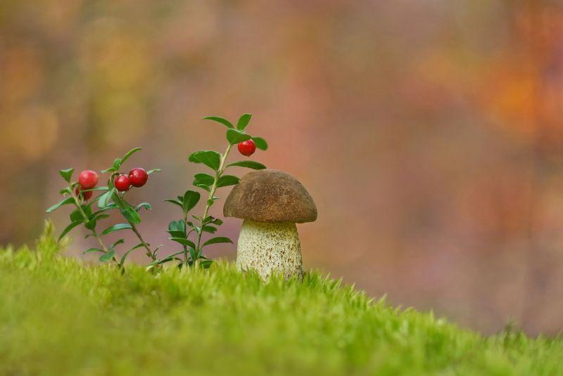 грибы, природа, гелиос На горе растут грибыphoto preview