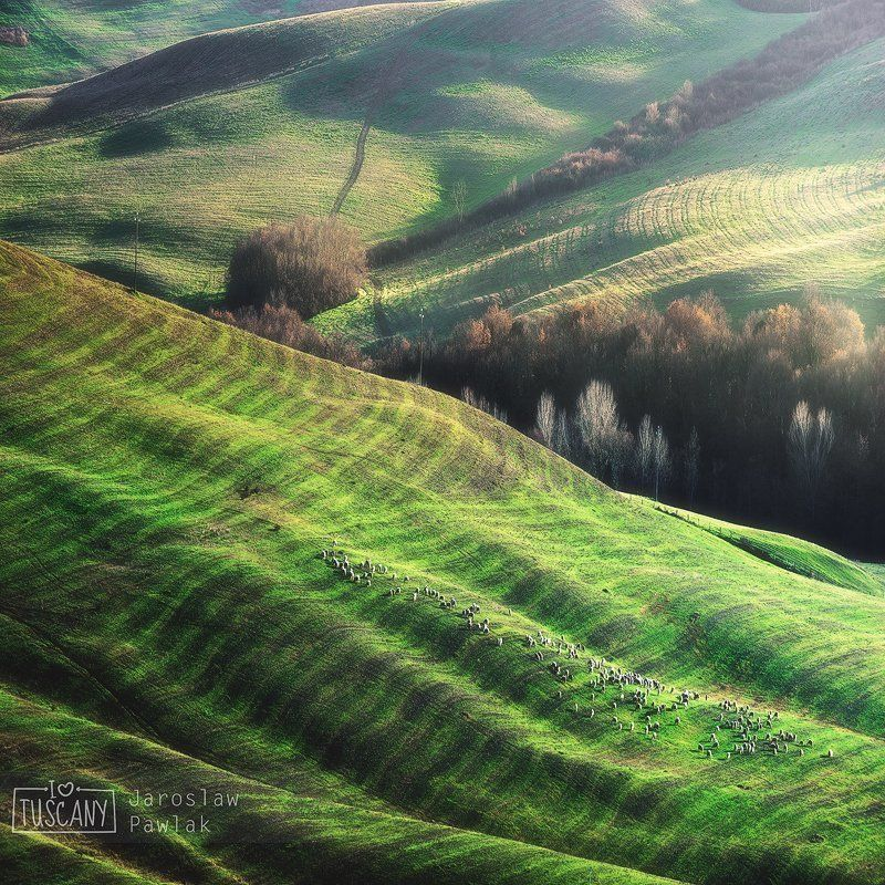 italy, countryside, rural, tuscany, nature, house, green, landscape, hill, spring, italian, meadow, cypress, beauty, tuscan, idyllic, country, agriculture, tree, farmhouse, peaceful, scenic, morning, view, summer, scene, italia, haze, europe, fog, garden, Green Winterphoto preview