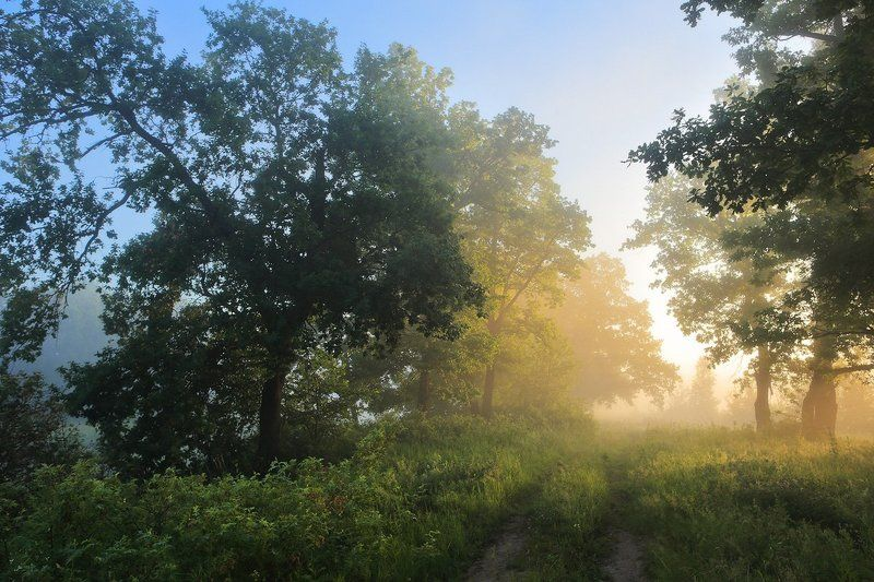 утро туман дубы По тропнкеphoto preview