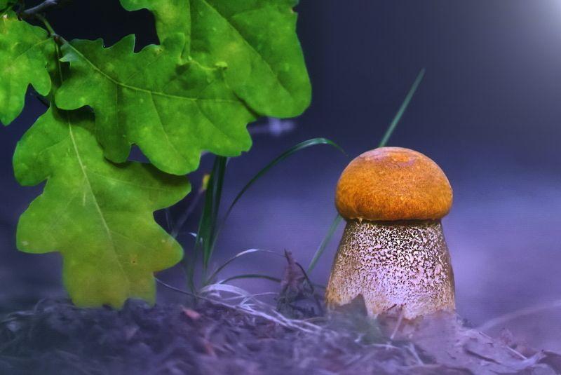 грибы, природа Горд на вид, подосиновик стоитphoto preview