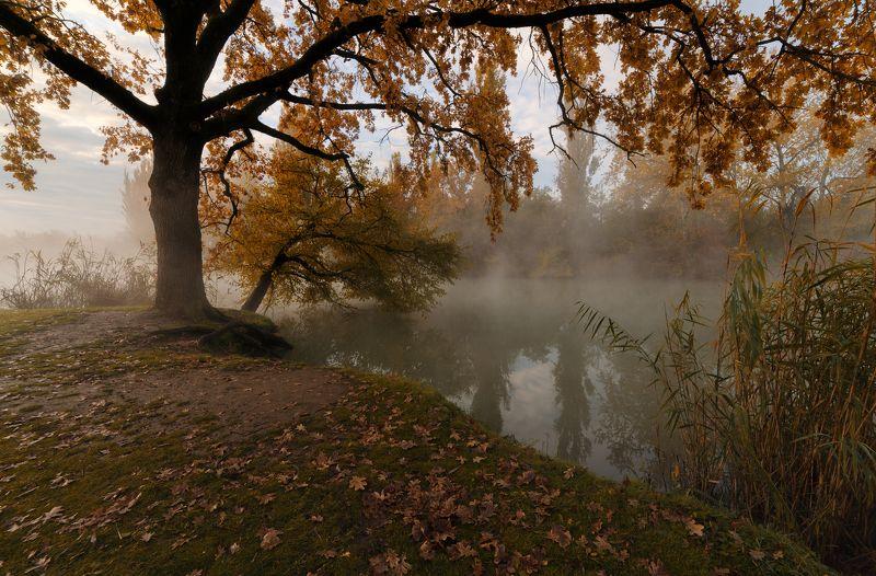 туман, утро Под шатром из осенних листьевphoto preview