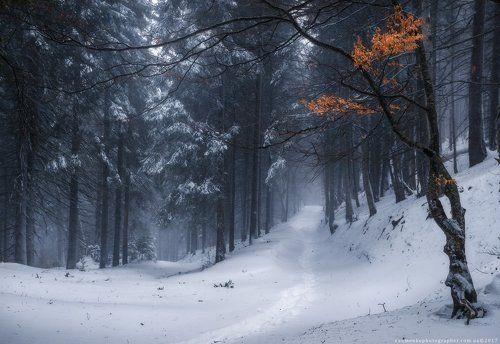 Закарпатье. Зимний лес по дороге на Петрос