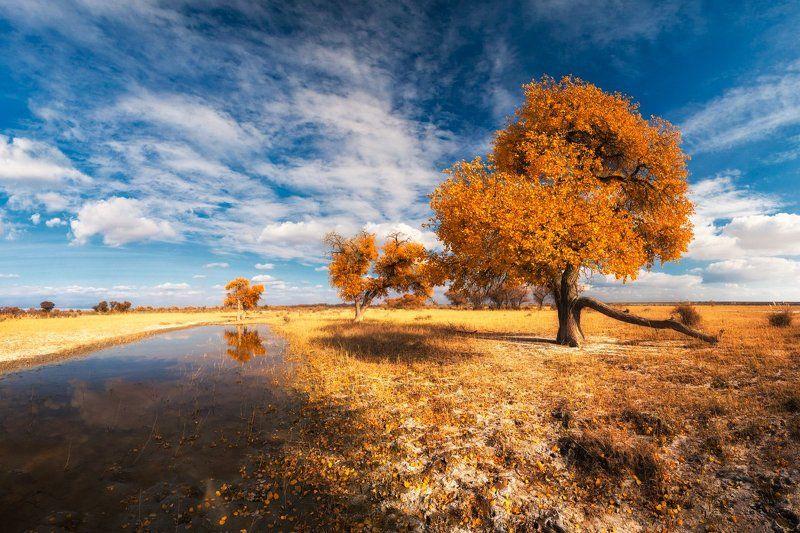 Деревья, Золотая осень, Октябрь, Осень, Тополь, Туранга Тёплый октябрьphoto preview