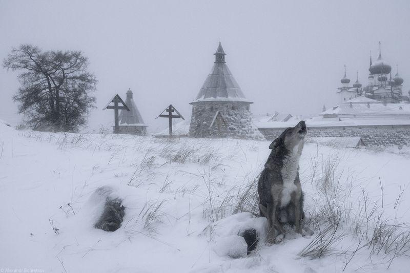 соловки, север, монастырь, фототур Поминальная молитваphoto preview