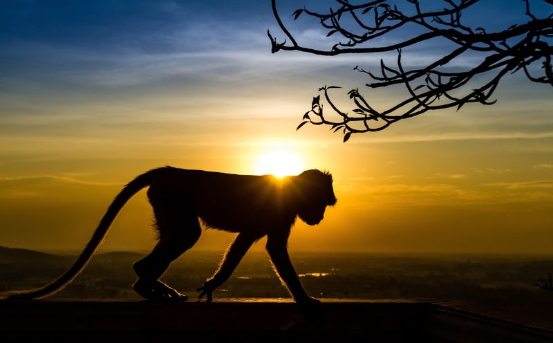 africa, kruger, monkey, sunset, sunlight, baby, animal hair, mammal, fur, shadow, orange, kruger national park, dusk, sun, father, asia, family, young, baboon, wilderness, primate, south africa, dawn, infant, mother, silhouette, wild, animal, safari, wil Silhouette of a monkey in sunsetphoto preview