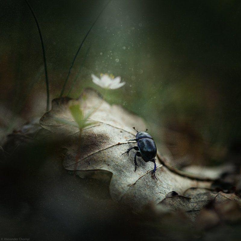 украина, коростышев, лес, красота, макро, макро мир, природа, макро-красота, макросъемка, Путь к светуphoto preview