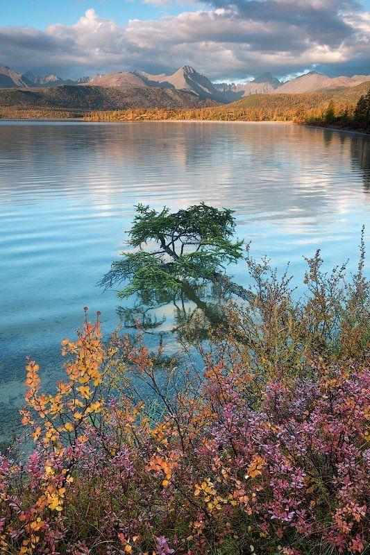 колыма, озеро джека лондона, коса биологов, колыма, магаданская область, россия, озеро, голубика, горы, утро, рассвет, лиственницы, отражение Голубиковое утроphoto preview