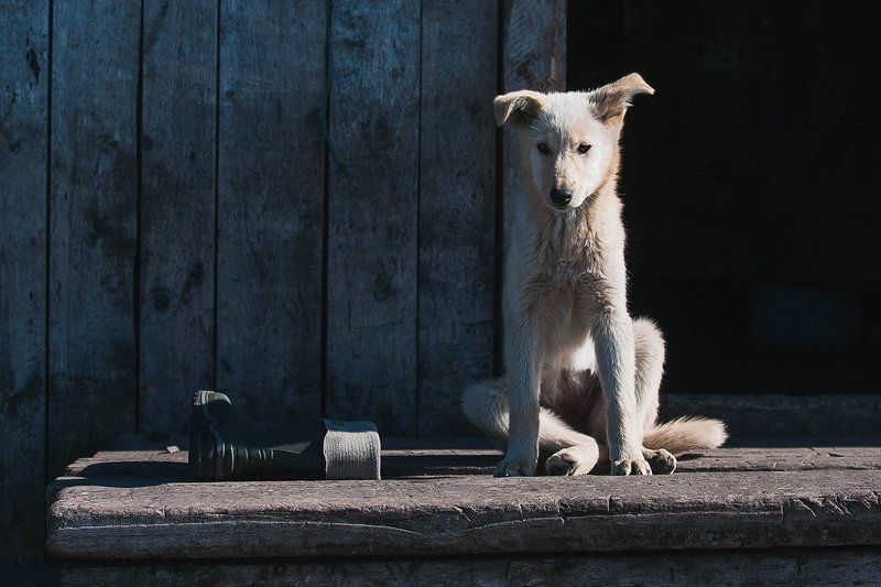 Пес и его сапогphoto preview