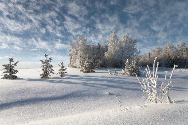 Следы снег сугробы лес зима мороз облака кружева Морозные кружева облаковphoto preview