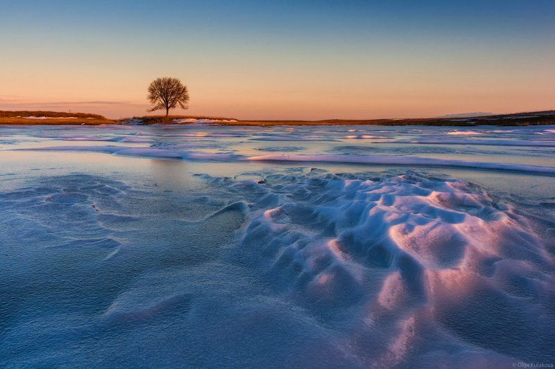 зима, озеро, лед, дерево, сорбулак, закат Зимний пейзаж с одиноким деревомphoto preview
