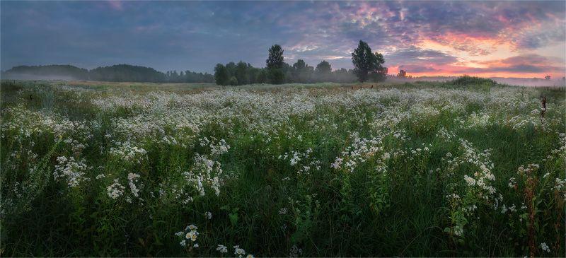 утро, луг, цветы Утро пасмурного дняphoto preview