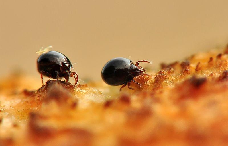 Супер мини жизнь на грибах :)photo preview