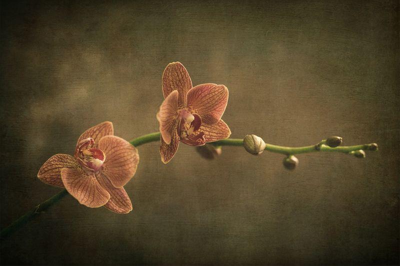 orchidphoto preview
