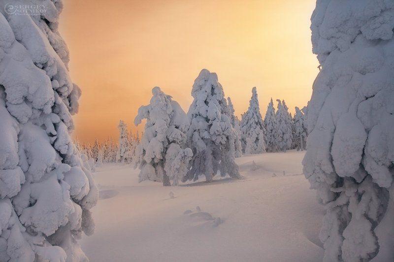 таганай зимний таганай ели снег Вечерний Таганайphoto preview