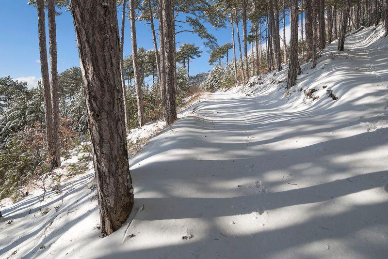 Зимние тени....photo preview