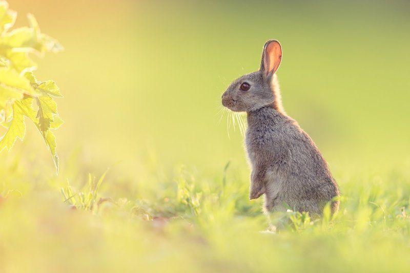 rabbit sweetiephoto preview