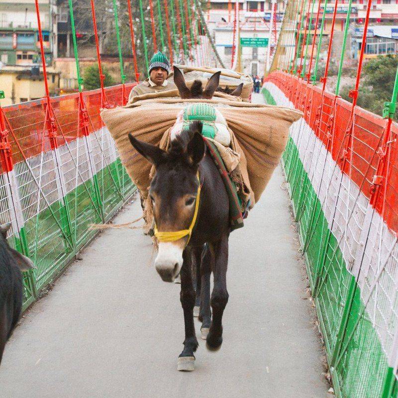 Занятые люди Северной Индииphoto preview