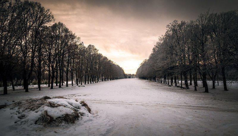 пейзаж, landscape, color, nature, trees, nikon, photo, beauty, sunshine, winter, snow Зимаphoto preview