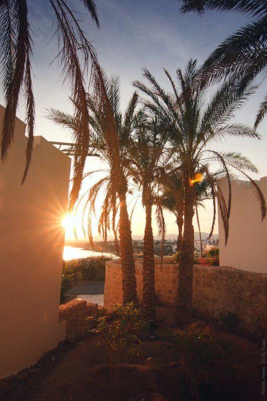 Египет, пальмы, свет, солнце, море, закат. вечер,  Пальмовый закатphoto preview