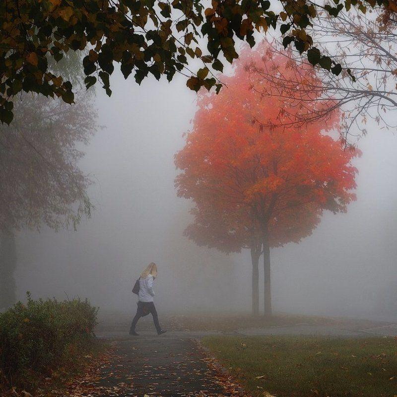 гелиос44, осень, город, улица, утро, туман, autumn, street, town, fog, morning Осеннееphoto preview