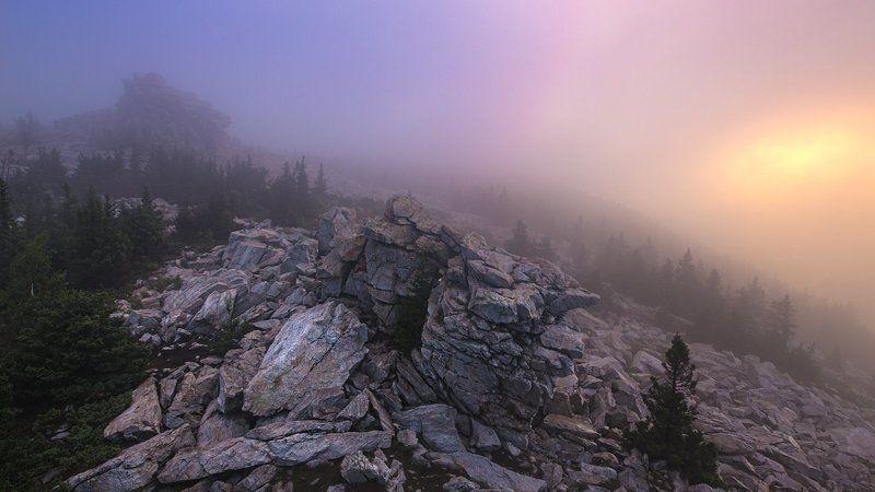 Медведи в туманеphoto preview