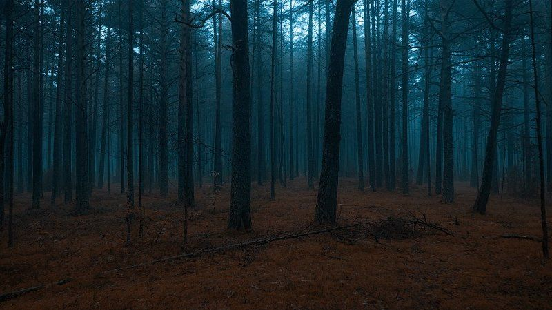 forest dark estonia fog Deep dark forestphoto preview
