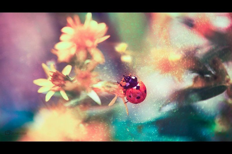 Insects, Ladybug, Nature story about ladybugphoto preview