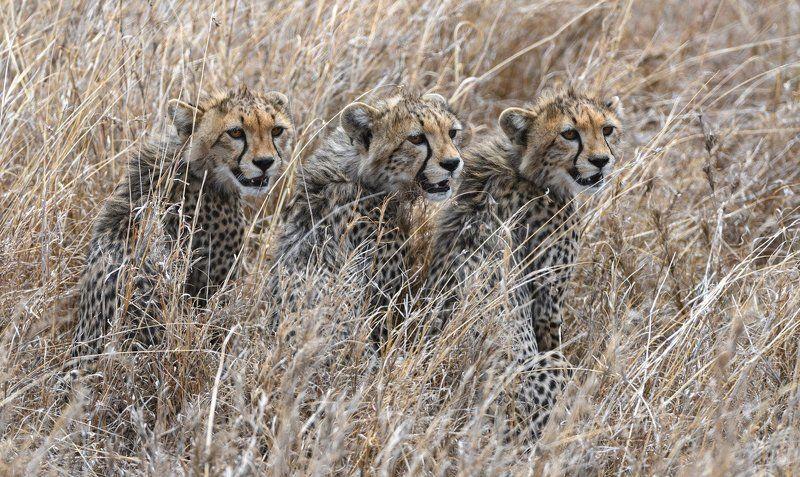 Котята по-африканскиphoto preview