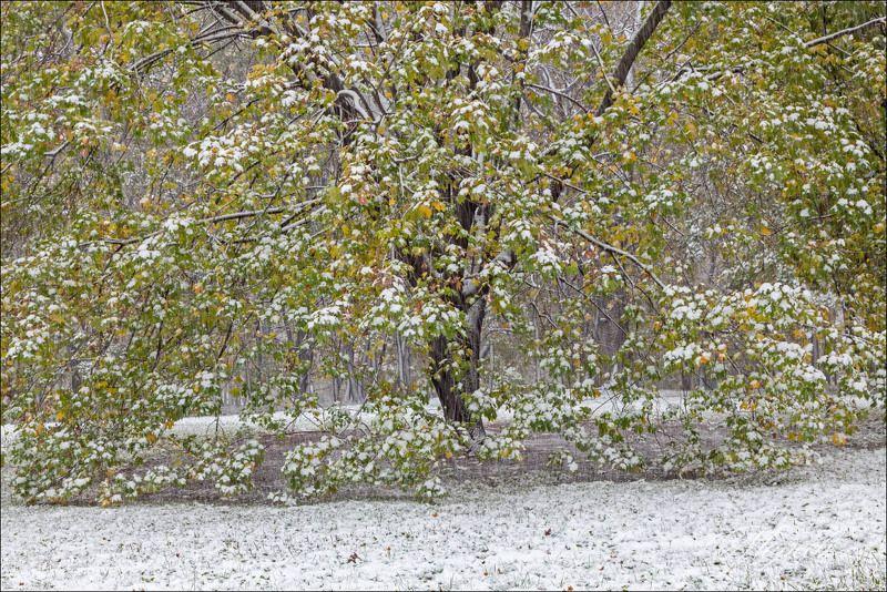 Октябрьский снег в паркеphoto preview